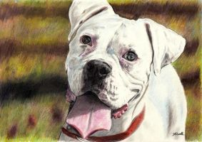 White Boxer- blue by SRussellart