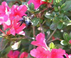 Bumble Bee by clumbsyangel