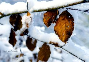 Winter. by Phototubby
