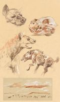 Hyena Sketches by AmandaMyers