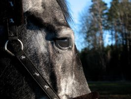 Horse eye II by Gunpowdersmoke