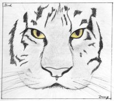 Lucky Tiger by Draugven