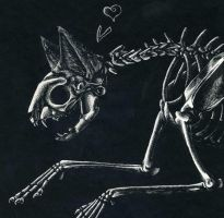 Cat Skeleton by ClickClack