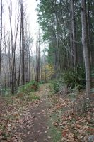 Forrest Path Stock 3 by CNStock