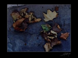 summer leaves by ANIMAfelis