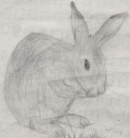 Hare by F-r-a-n-c-i-s-c-o