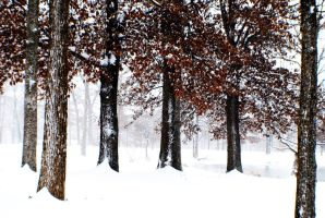 Blizzard In the Woods by ValPark