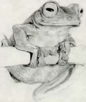 Frog (pencil) by chaseroflight