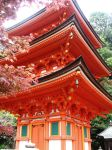 Red leaves and red pagoda by jande