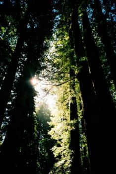 the redwoods by BT011010