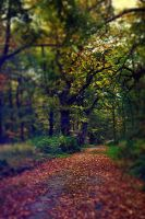 Woodland Trail by Dagwanoenyent