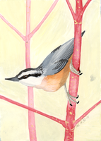 Red-Breasted Nuthatch by SlateGray