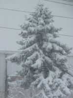 Snow Tree by LW-Lucy