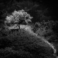 The Tree by hersley