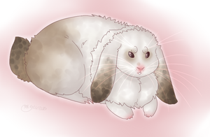 AT: Bunny by vers-l-avant