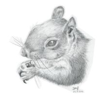 Squirrel head by Wenchkin