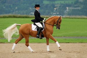 Dressage by EllinorBergman
