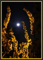 ...Springtime Moonlight... by floriaiglenoir
