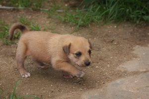 Puppy on the Prowl by SurinameBlogger