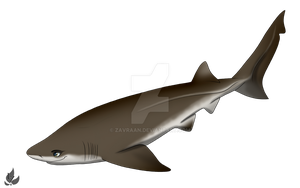 Six gilled shark by zavraan