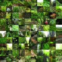 100 Shades of Green by KonstanzeFaust