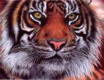 Tiger - Bic Ballpoint Pen by VianaArts