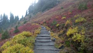 Fall color at Mt.Rainier by pokemontrainerjay