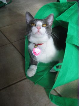 Cat's still in the bag by number1tolkienfan
