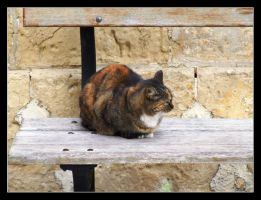 the cat by lucaport