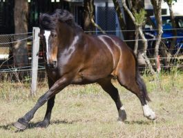 STOCK - 2014 Sep Tolly-74 by fillyrox
