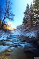 Pre Winter Cottonwood Stream by mjohanson