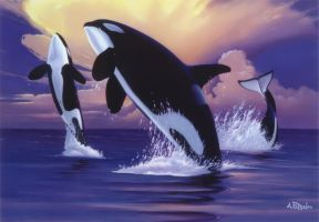 Killer Whales by Andrew-Patsalou