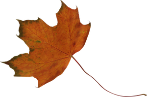 maple leaf orange and green precut png by Nexu4