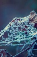Frosted Web by Dagwanoenyent