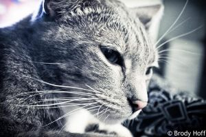 Bela - Whiskers by ayla