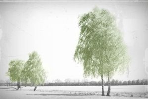 Wind in the Birch by PhotoartBK