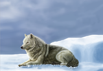 Arctic wolf by LauriieT