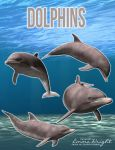 Dolphins by zememz