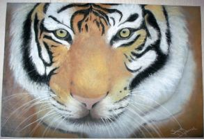 Tiger soft pastel by ScreamEmotion