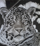 The Powerful Jaguar by TheArtistSamanthaST
