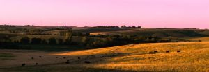 Country Life #2 by KRHPhotography