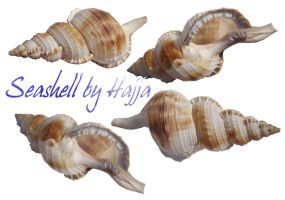 seashell Stock by aswad-hajja