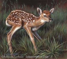 A Little Unsteady - Fawn by rebeccalatham
