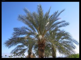 The Palm by BlueArctic4