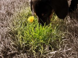 Smell the..... Dandilion? by Readmeabook21