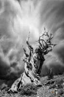 Twisted In time by tassanee
