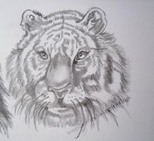 The head of a tiger by LovingDrawings