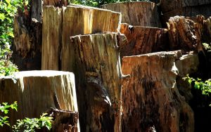 Sunlite Stumps by RoyalScanners