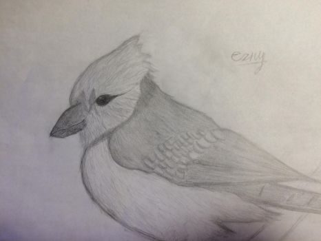 Blue Bird Sketch (Remake) by Ezny