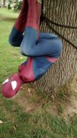 and here we have a tree dwelling spider by spidey38
